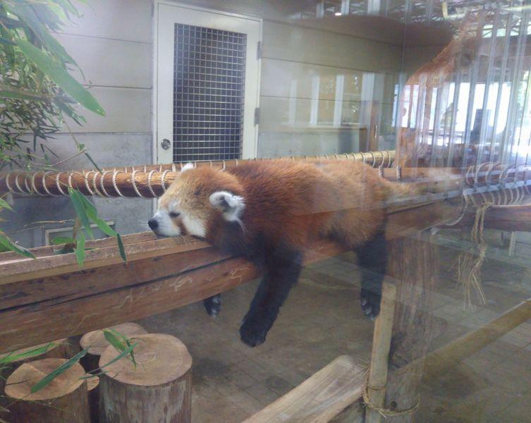 【羽村】動物と触れ合えるオススメスポット!羽村市動物公園