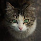 2月22日は・・・猫の日って知ってました?